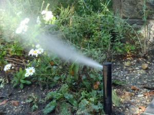 Sprinkler spraying on home garden